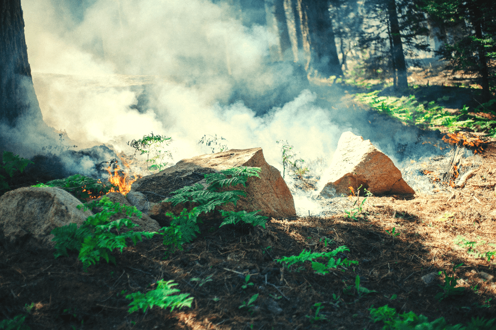 smoke rising from a wildfire