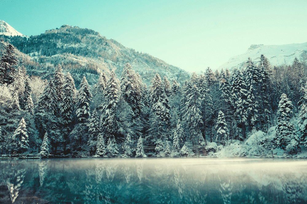 snow covered pine trees next to a frosty lake in the winter