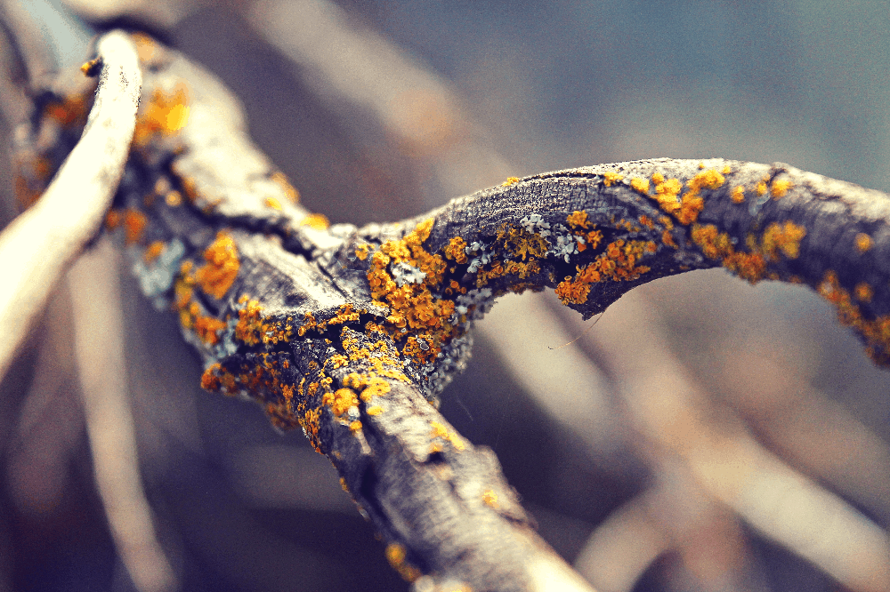 tree branch with moss on it