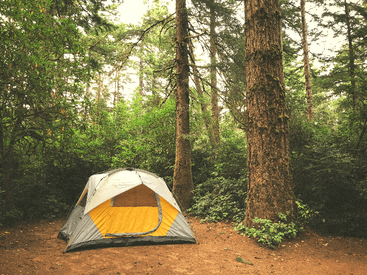 yellow tent in a forest