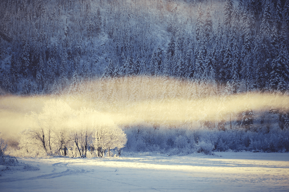 wind blowing in a winter forest