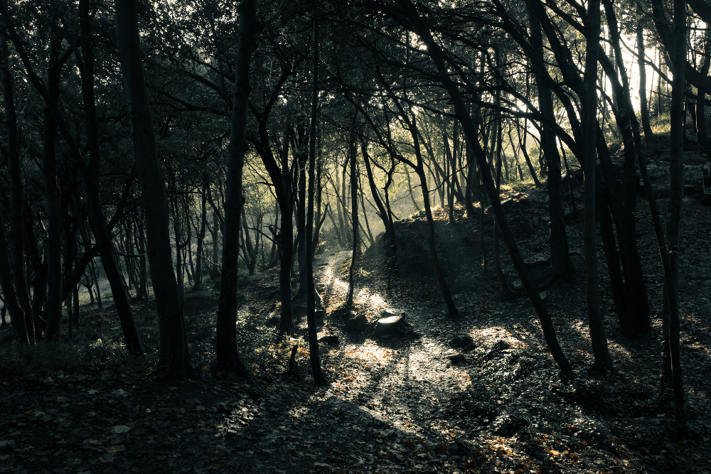 forest in illinois