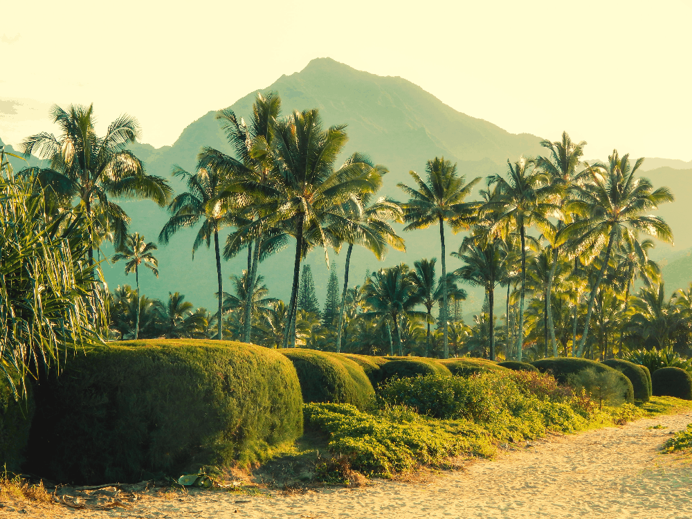 palm trees and beach in hawaii