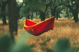 hammock hanging in the trees