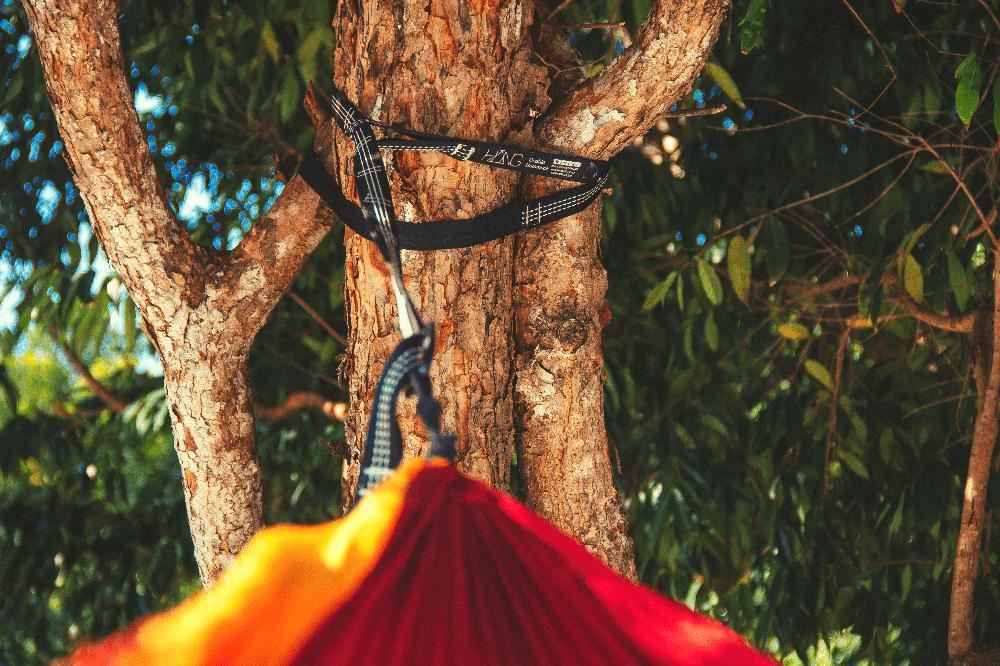 hammock straps around a tree
