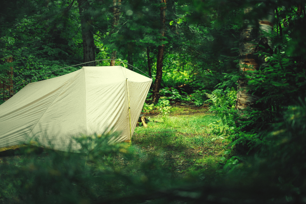 tent set up in a green forest