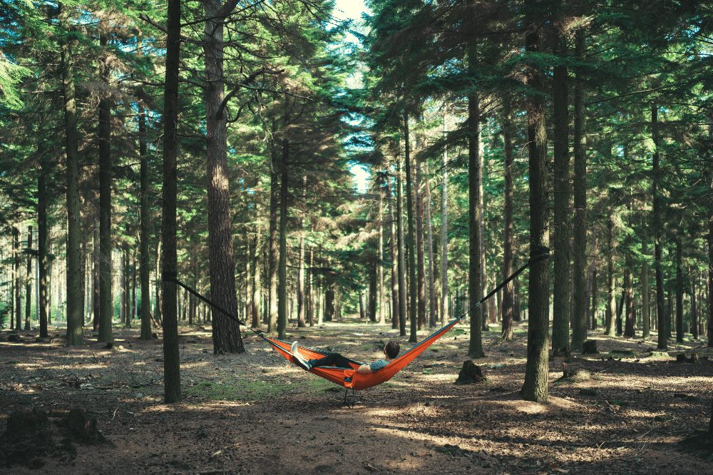 man lying in a hammock between two trees in a forest
