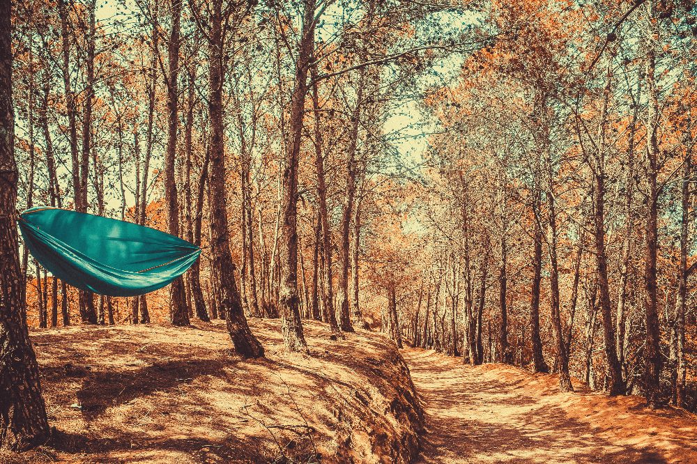 hammock tied between two trees during the fall by a trail